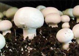 هواساز پرورش قارچ